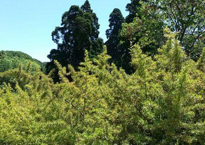 Jardín Casita de Arriba