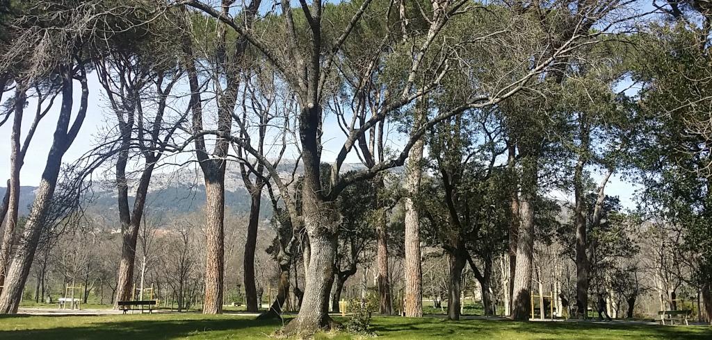 Paseo Botánico por los jardines de la Casita del Príncipe