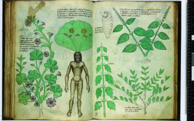 Tractatus de Herbis