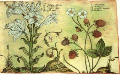 Agricultura de Jardines, de Gregorio de los Ríos