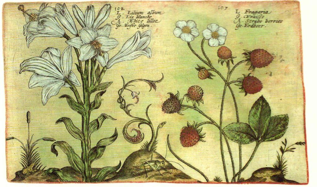 Plantas del Jardín, Gregorio de los Ríos