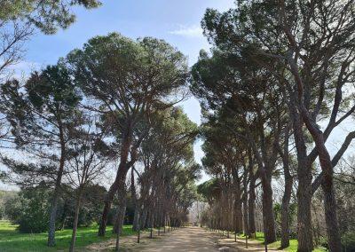 Paseo de pinos